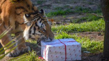 Férias de Natal selvagens no Jardim Zoológico
