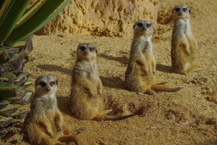Jardim Zoológico lança férias de Natal online que dão direito a prémios